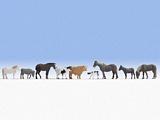 Noch NO15713 Farm Animals for H0