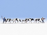 Noch NO15724 Drover and Cows for H0