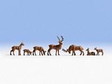 Noch NO15730 Deer for H0