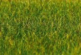 Faller 180485 Premium ground cover fibres 30g Grass long