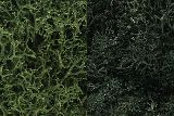 Woodland Scenics 0168 Lichen Dark Green Mix